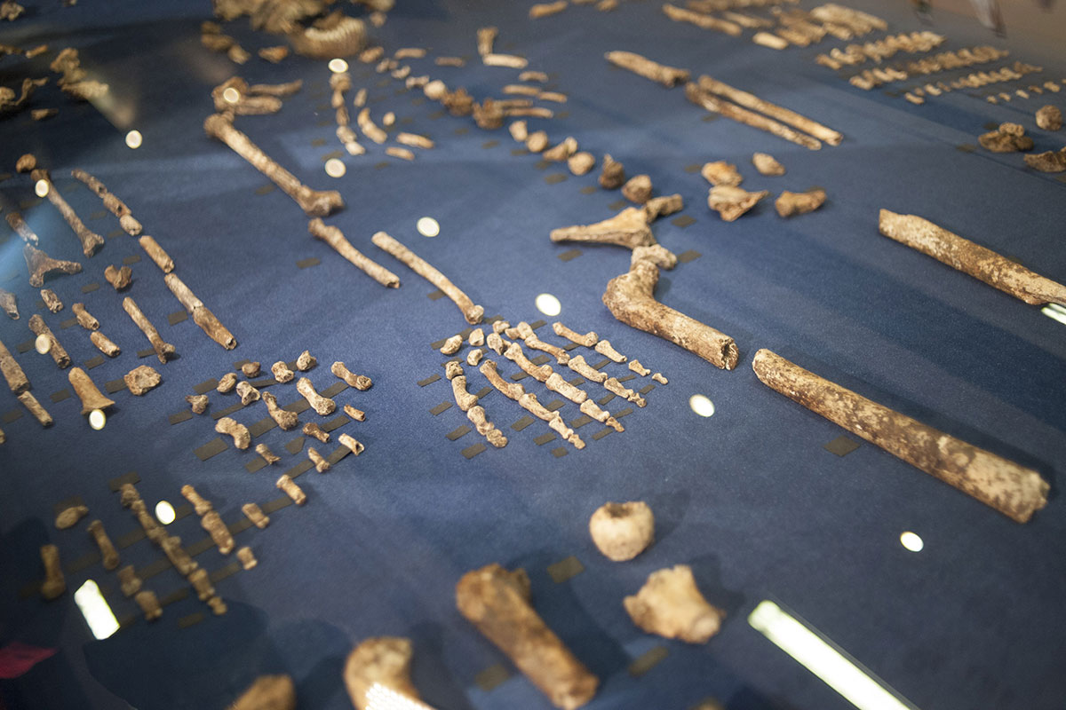The skeleton of Homo Naledi
