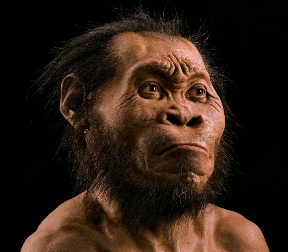 Homo naledi facial reconstruction